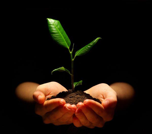 Program Outline Sonesha Upasana Enlightenment Personal Growth